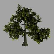Oak Tree Low Poly 3d model