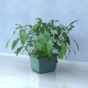 Roślina 3d model