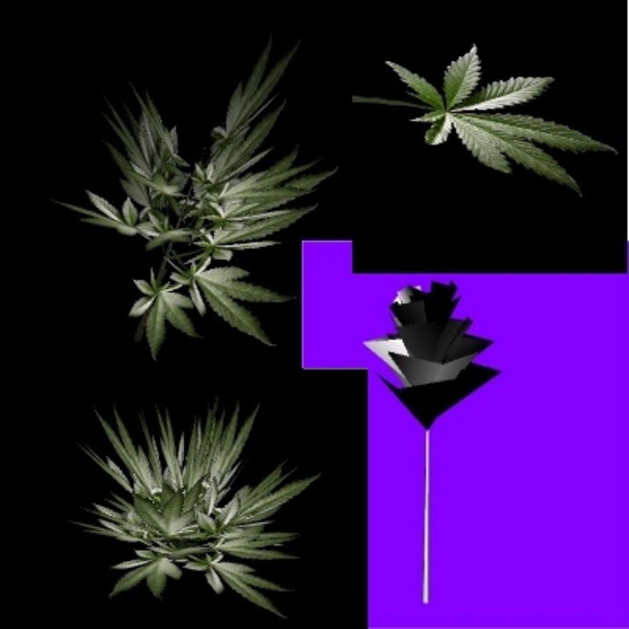 3d марихуана 10 за чтобы курить марихуану