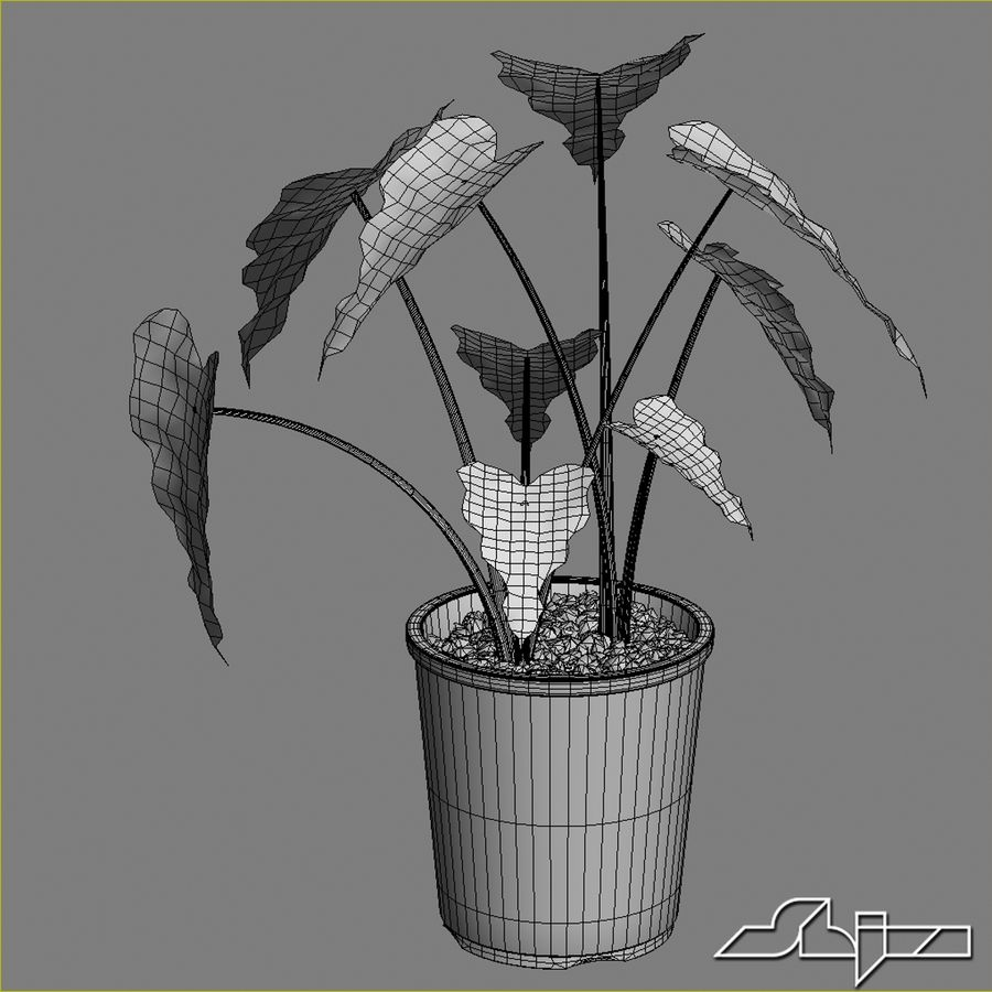 Tencerede Alocasia Tesisi royalty-free 3d model - Preview no. 5