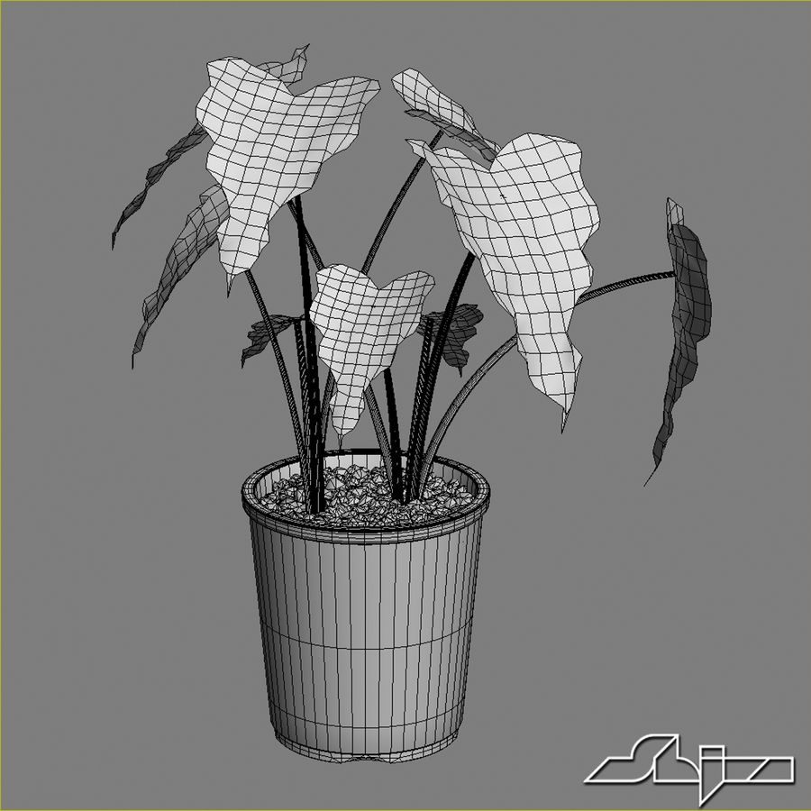 Tencerede Alocasia Tesisi royalty-free 3d model - Preview no. 4