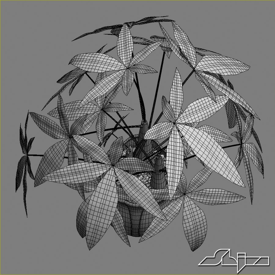 Fatsia House Plant in Vase royalty-free 3d model - Preview no. 7