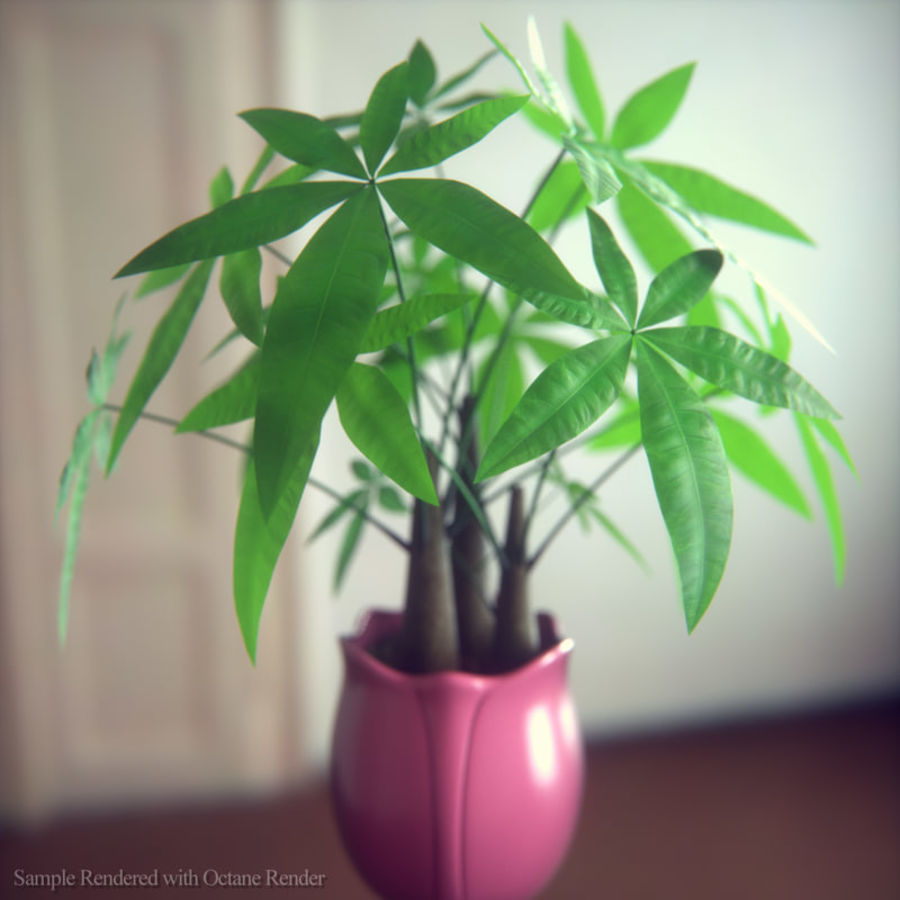 Fatsia House Plant in Vase royalty-free 3d model - Preview no. 3