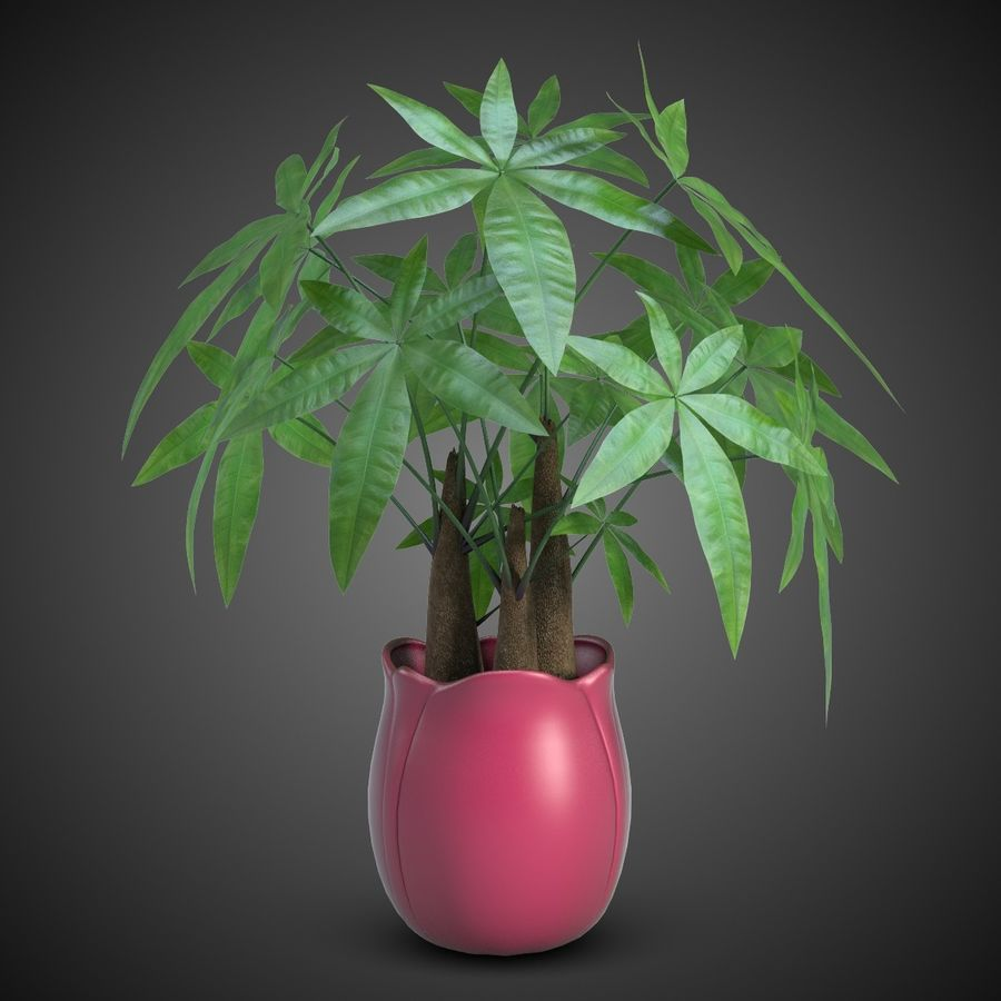 Fatsia House Plant in Vase royalty-free 3d model - Preview no. 2