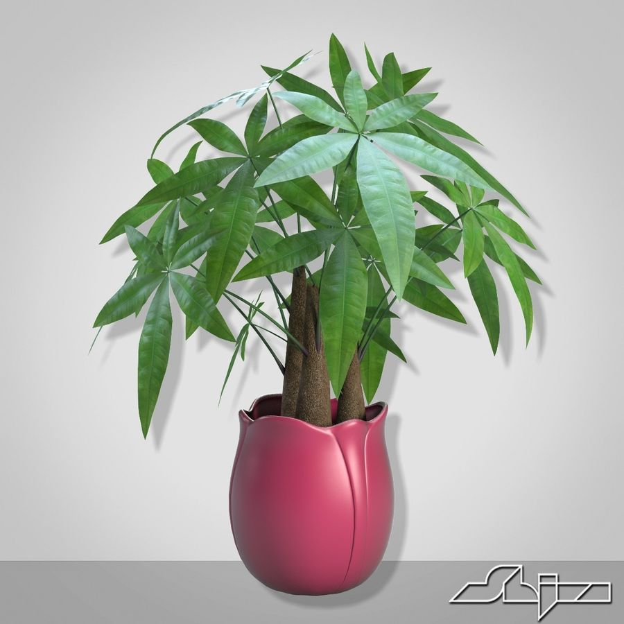 Fatsia House Plant in Vase royalty-free 3d model - Preview no. 4