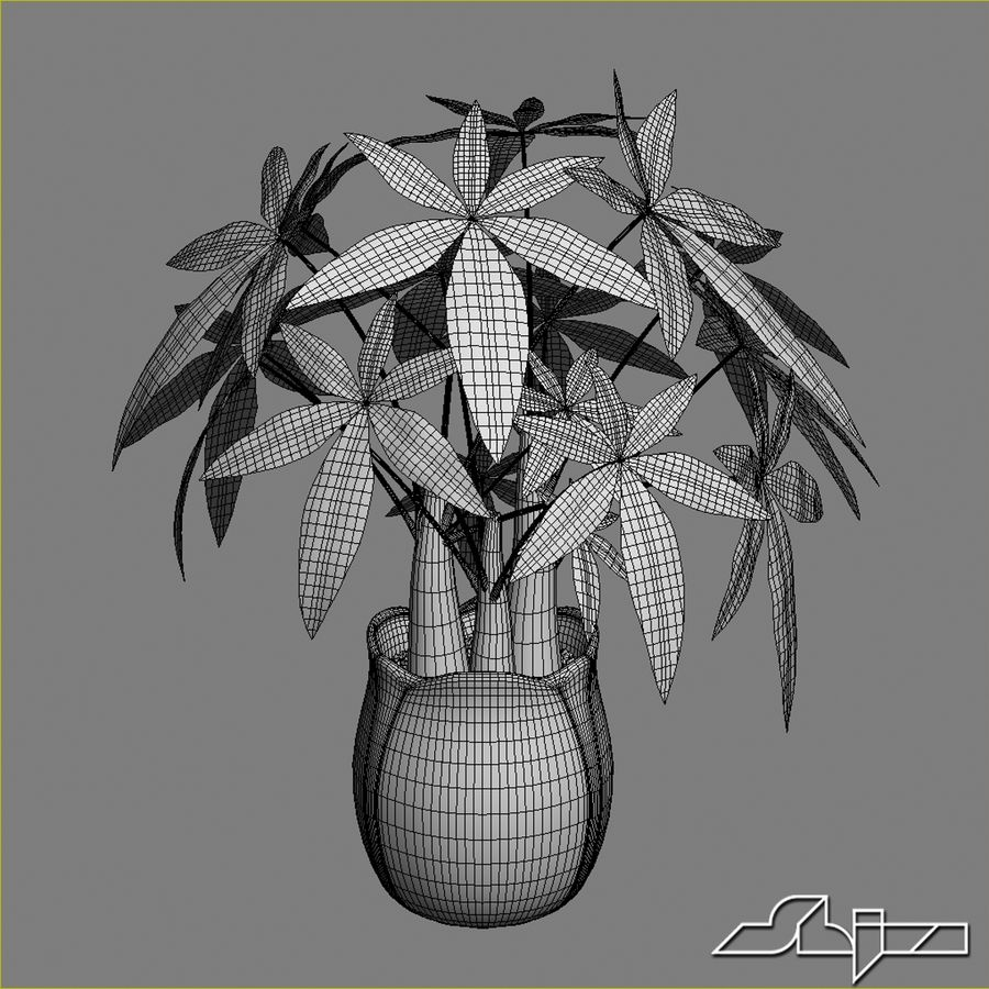 Fatsia House Plant in Vase royalty-free 3d model - Preview no. 6