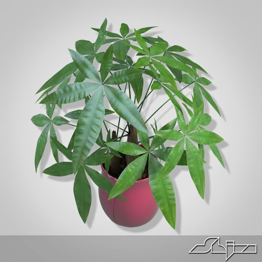 Fatsia House Plant in Vase royalty-free 3d model - Preview no. 5