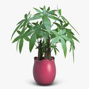 Fatsia House Plant in Vase 3d model