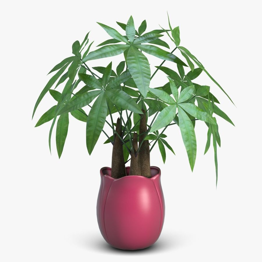 Fatsia House Plant in Vase royalty-free 3d model - Preview no. 1