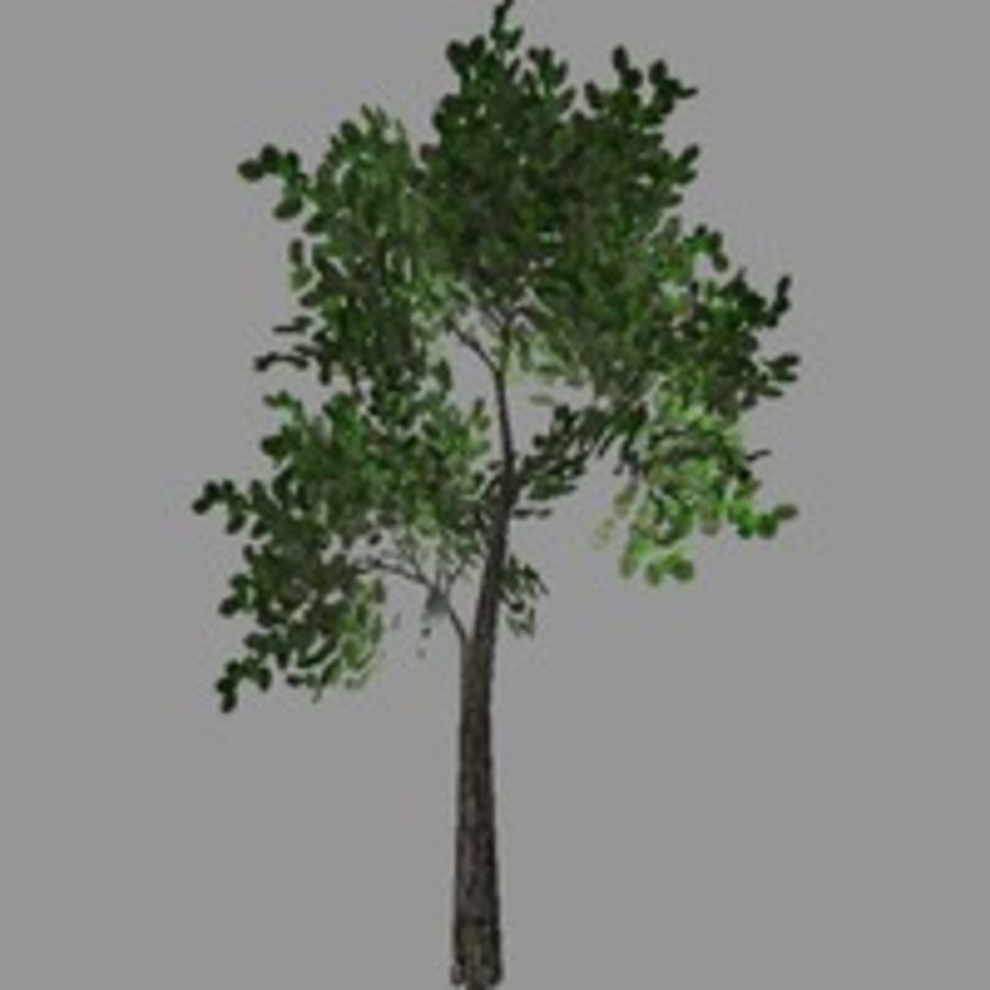 Tree model # 9 royalty-free 3d model - Preview no. 2