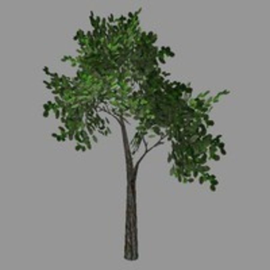 Tree model # 9 royalty-free 3d model - Preview no. 1