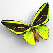 Butterfly 7 3d model