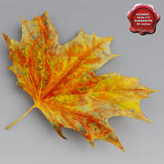 Maple Leaves Autumn 3d model