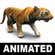 Tiger animerad 3d model