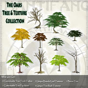 Country Oak Tree & Texture Collection 3d model