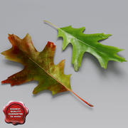 Oak Leaves Summer Autumn 3d model