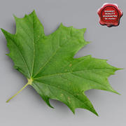カエデの葉の夏 3d model