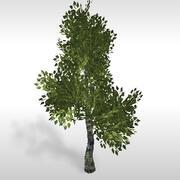 白桦树#3 3d model