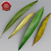 Willow Leaves Summer Autumn 3d model