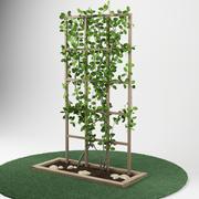 plant_garden_pergola_05 3d model