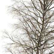 Winter Tree V3 3d model