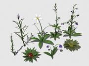 Collection de plantes 2 3d model