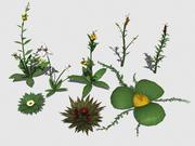 Collection de plantes 1 3d model