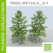 Träd - BETULA_01 3d model