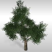 Oak tree # 5 3d model