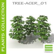 Tree - ACER_01 3d model