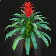 Roślina Guzmania 3d model