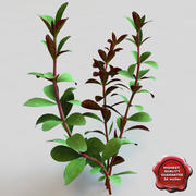 Aquarium Plant Ludwigia 3d model