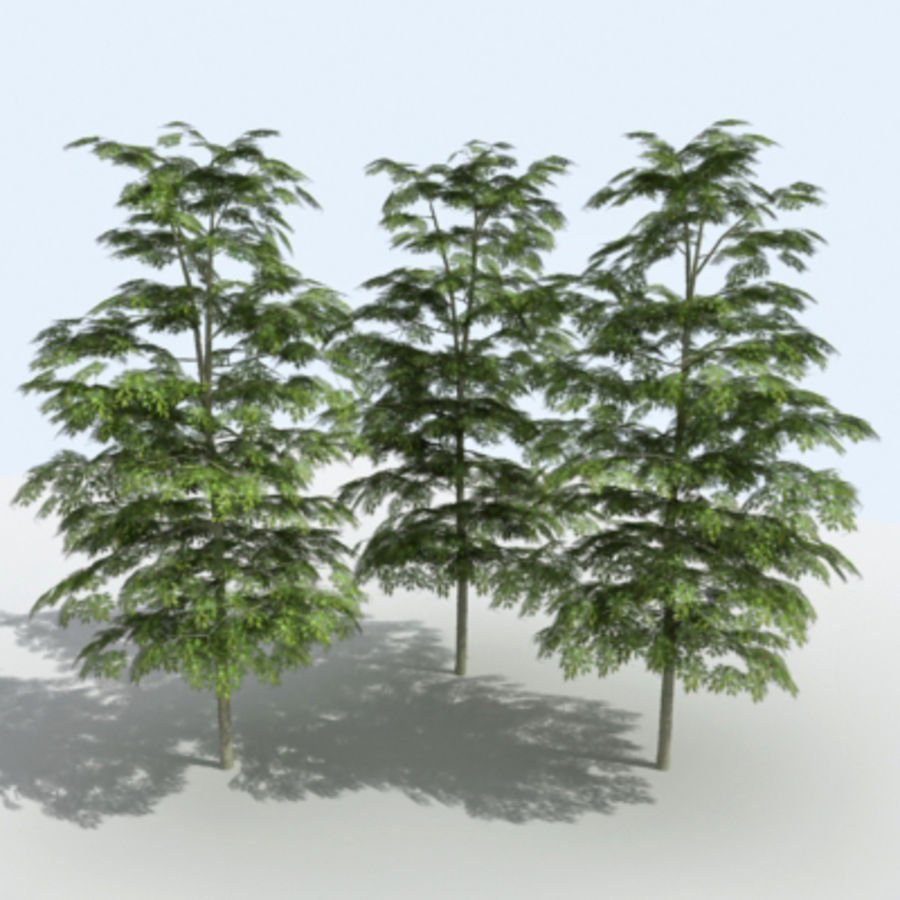 Arbre - OAK_01 royalty-free 3d model - Preview no. 7