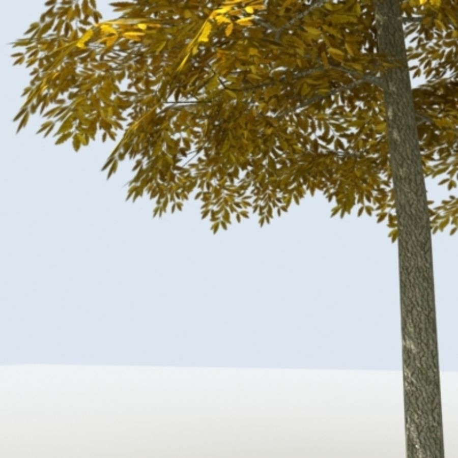 Arbre - OAK_01 royalty-free 3d model - Preview no. 11