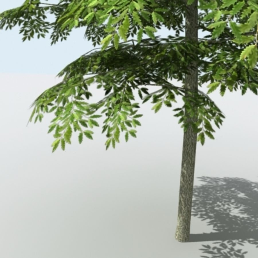Arbre - OAK_01 royalty-free 3d model - Preview no. 5