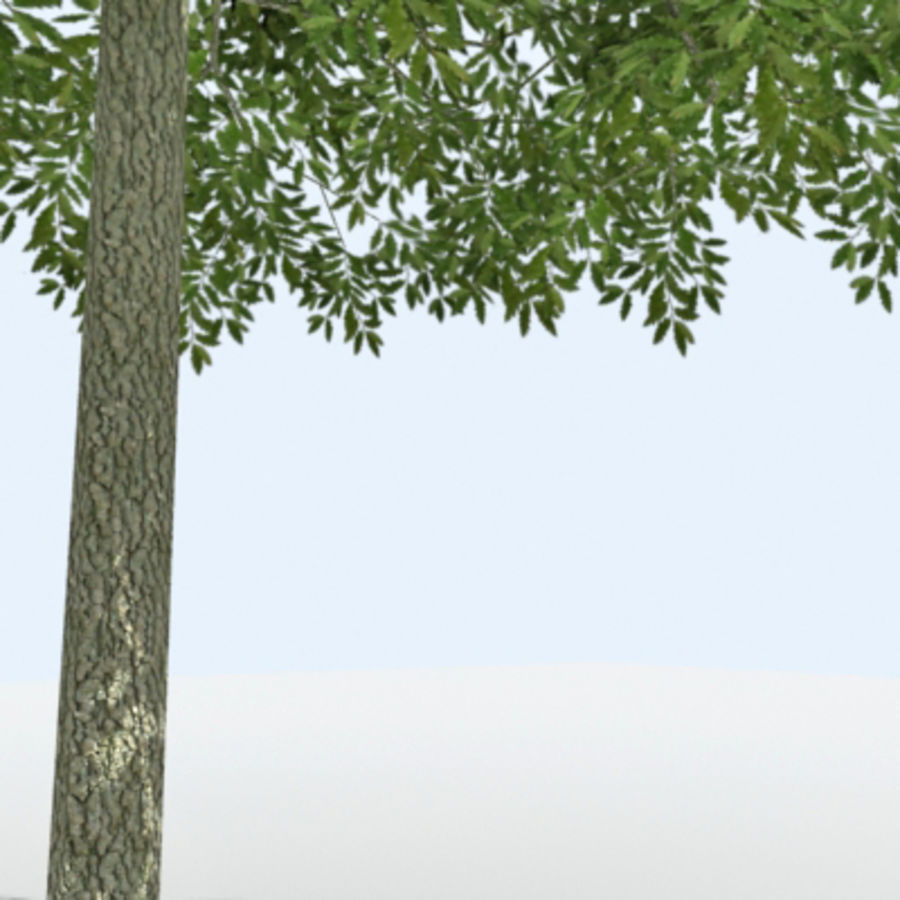 Arbre - OAK_01 royalty-free 3d model - Preview no. 6