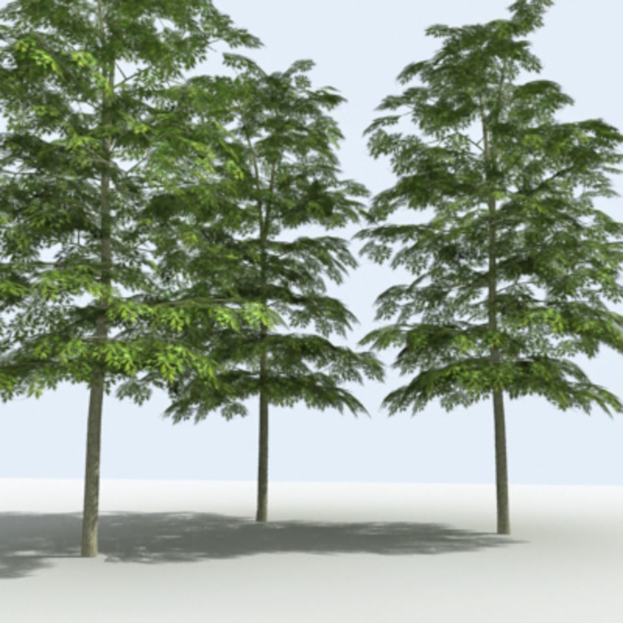 Arbre - OAK_01 royalty-free 3d model - Preview no. 8
