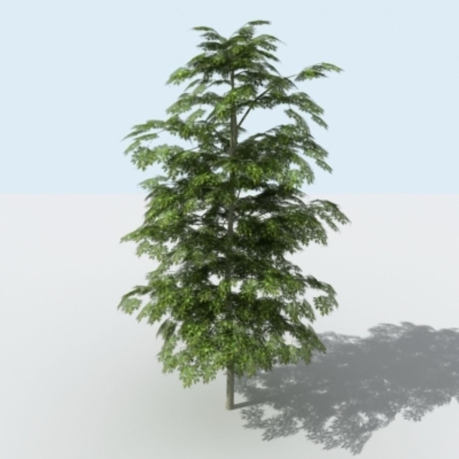 Arbre - OAK_01 royalty-free 3d model - Preview no. 4