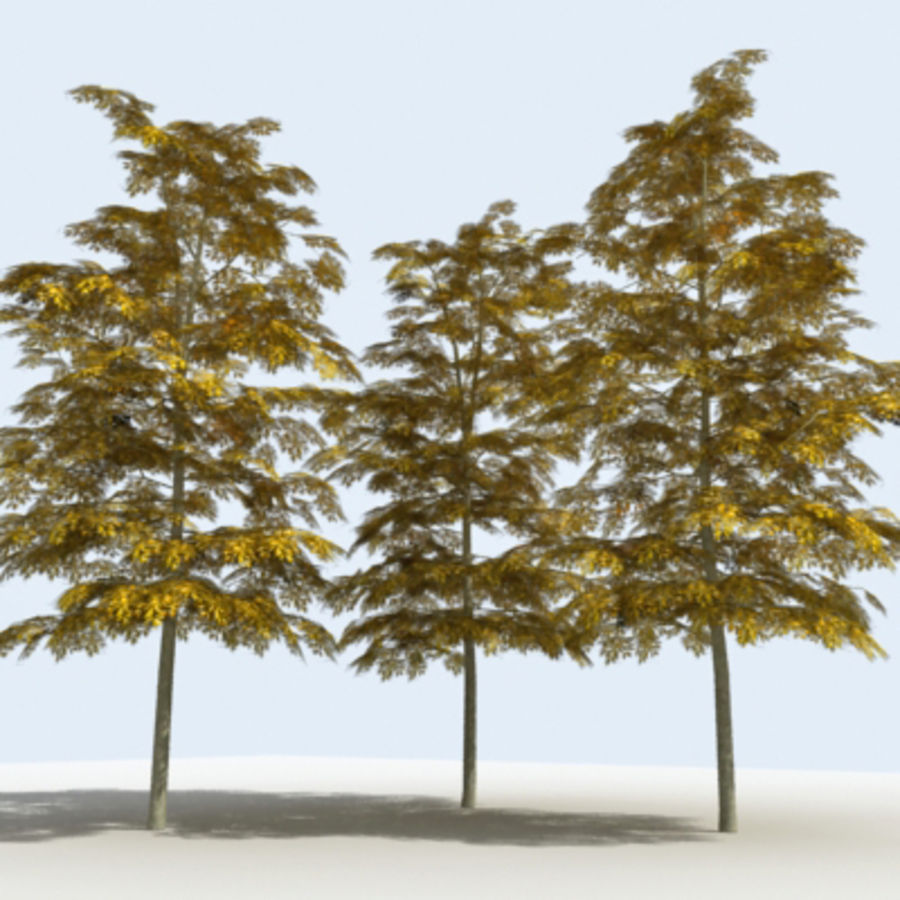 Arbre - OAK_01 royalty-free 3d model - Preview no. 12