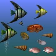 Fishes and Shells 3d model