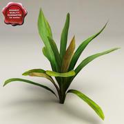 水族馆植物Echinodorus 3d model