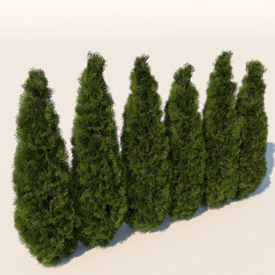 Plant Cedar Bushes royalty-free 3d model - Preview no. 2