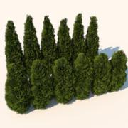 Planta de cedro arbustos modelo 3d