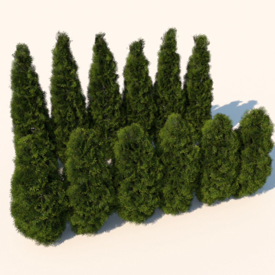 Planter des buissons de cèdre royalty-free 3d model - Preview no. 1