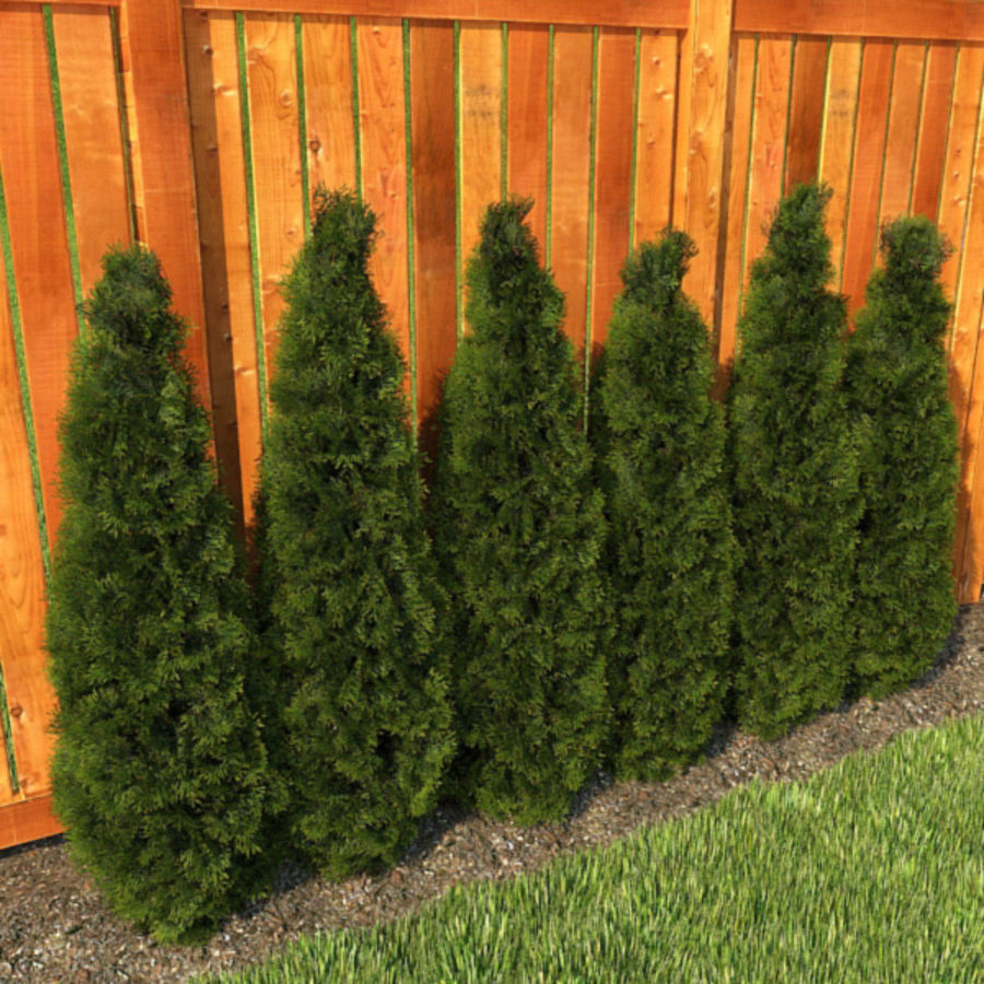 Plant Cedar Bushes royalty-free 3d model - Preview no. 3