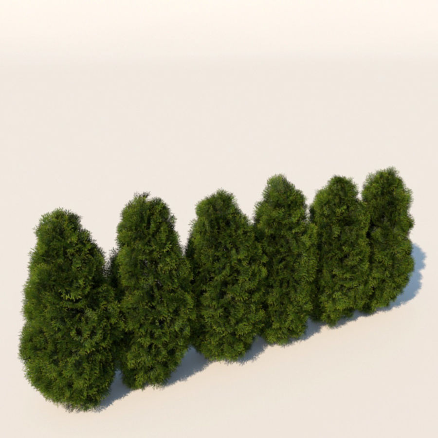 Plant Cedar Bushes royalty-free 3d model - Preview no. 4