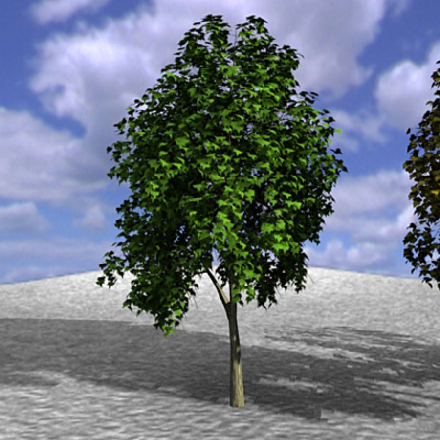 Tree, Trees, Arbol, Arboles royalty-free 3d model - Preview no. 6