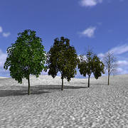 Tree, Trees, Arbol, Arboles 3d model
