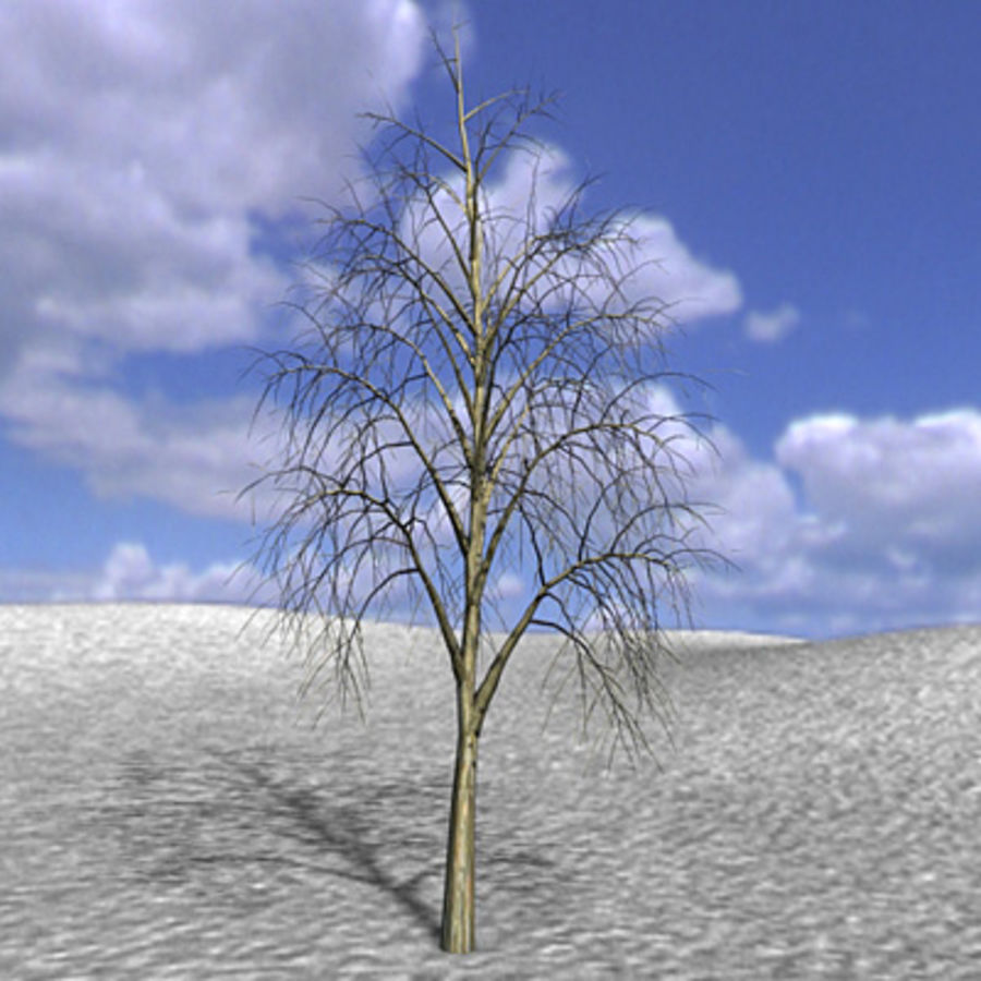 Tree, Trees, Arbol, Arboles royalty-free 3d model - Preview no. 3