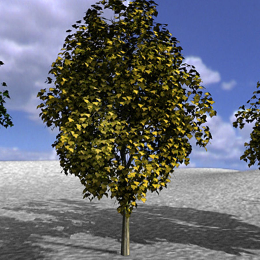 Tree, Trees, Arbol, Arboles royalty-free 3d model - Preview no. 5